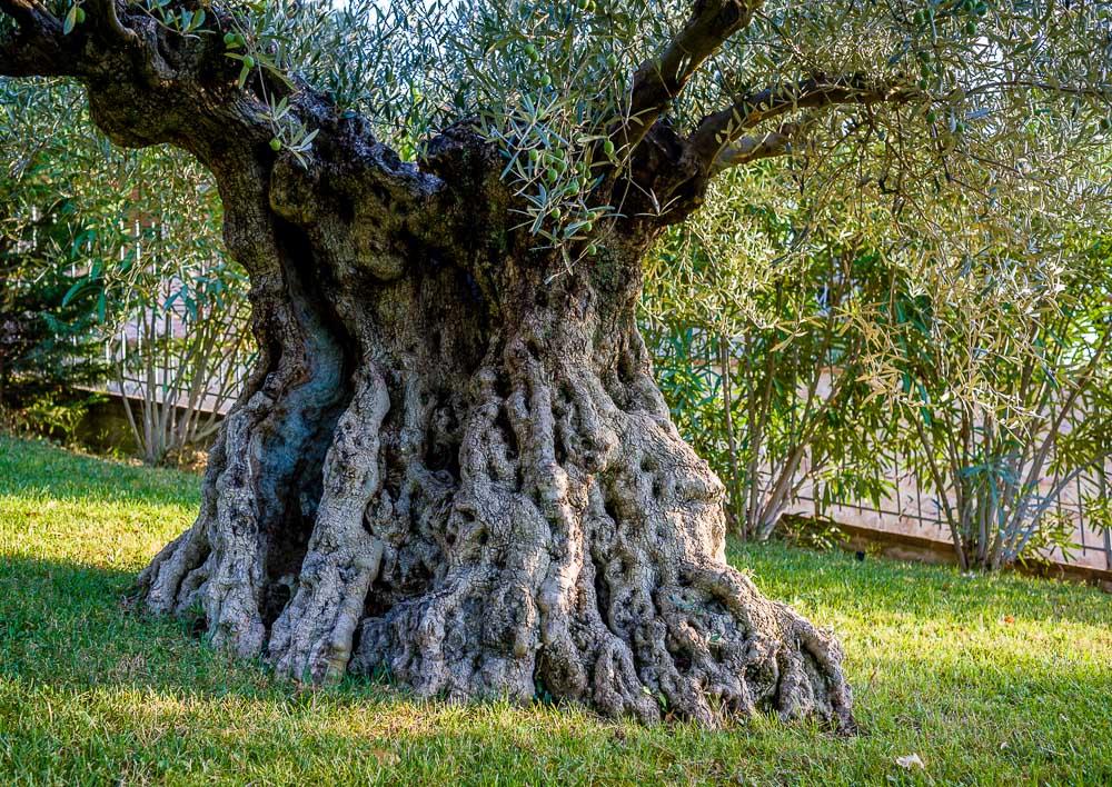 DSC_9283 Ślub na granicy Umbrii i Toskanii. Część II czyli jak się znajduje magiczne miejsce na ślub Matrimonio