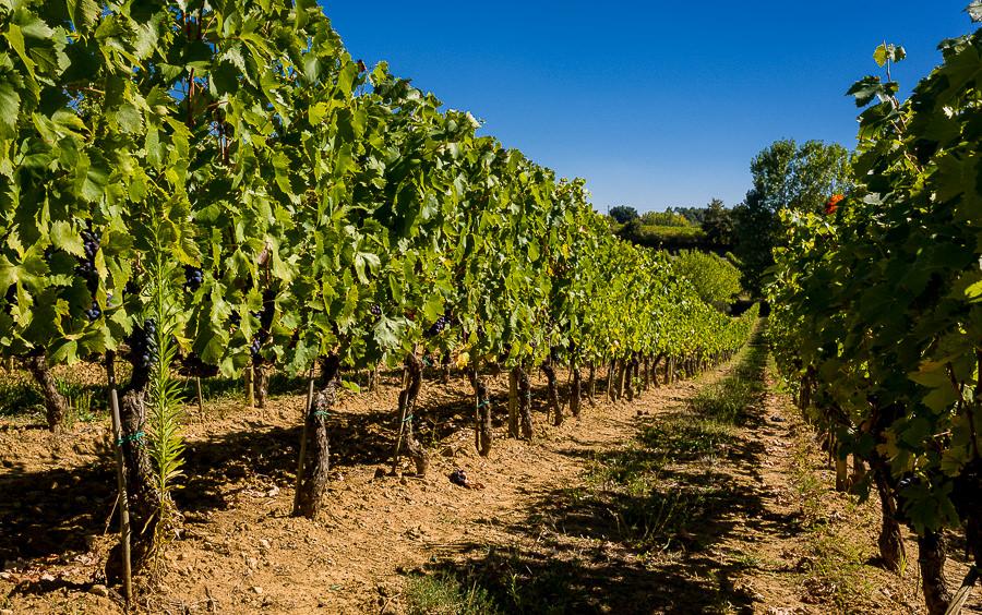 DSC_9116 Wszystkie drogi prowadzą po wino Matrimonio