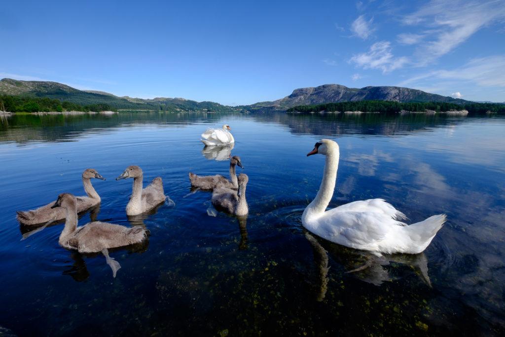image-3-1024x683 Norwegia - ludzie, pogoda, pieniądze - cz.1 Lato 2016 Norwegia